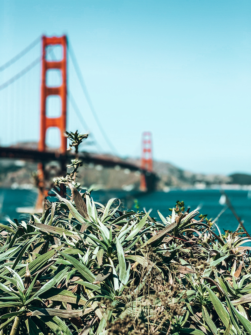 Golden Gate Bridge portrait