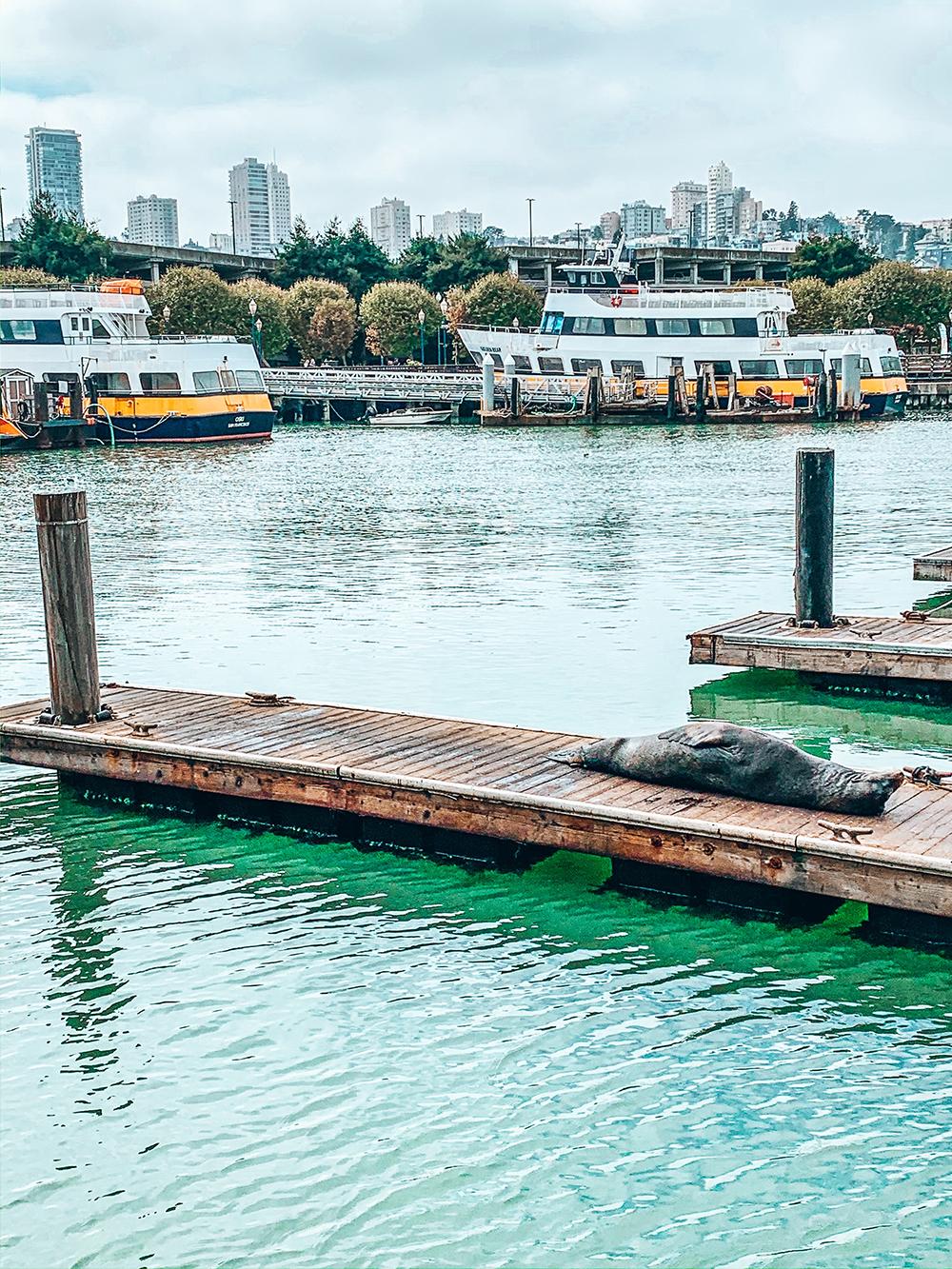 Lion de mer qui bronze sur le Pier 39